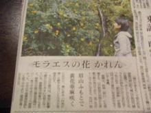 パッケージ松浦 のブログ-黄花亜麻新聞