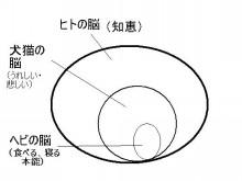 パッケージ松浦 のブログ-脳